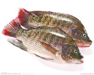 海南罗非鱼及制品出口居全国第二